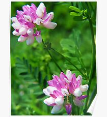 Crown Vetch Duo Poster