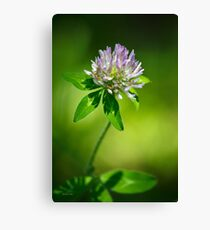 Purple Clover Canvas Print