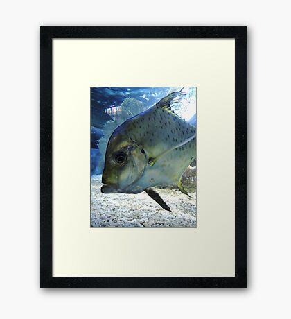 Friendly Fish Framed Print