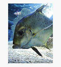 Friendly Fish Photographic Print