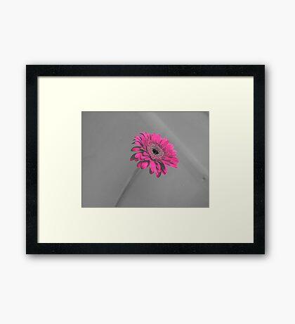 Fuschia Gerbera Framed Print