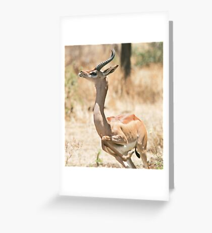 Gerenuk 1 Greeting Card