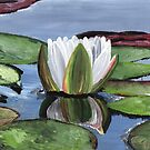 Waterlily by Judy Bergmann