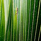 Lizard Amongst The Leaves by melmoth