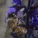 Bee and flower macro lens reversed detail shot color  by Jason Franklin