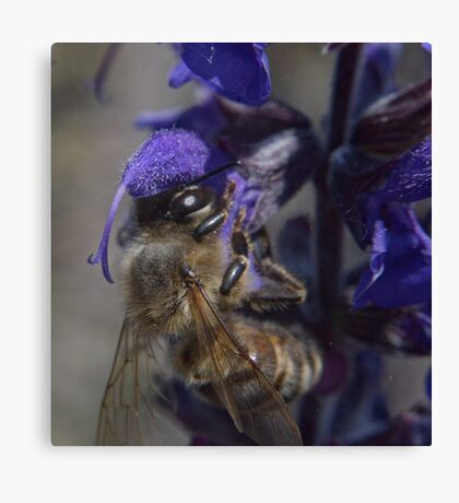 Bee and flower macro lens reversed detail shot color  Canvas Print