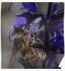 Bee and flower macro lens reversed detail shot color  Poster