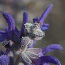 Little flower detail lens reversed macro pollen color 1 by Jason Franklin