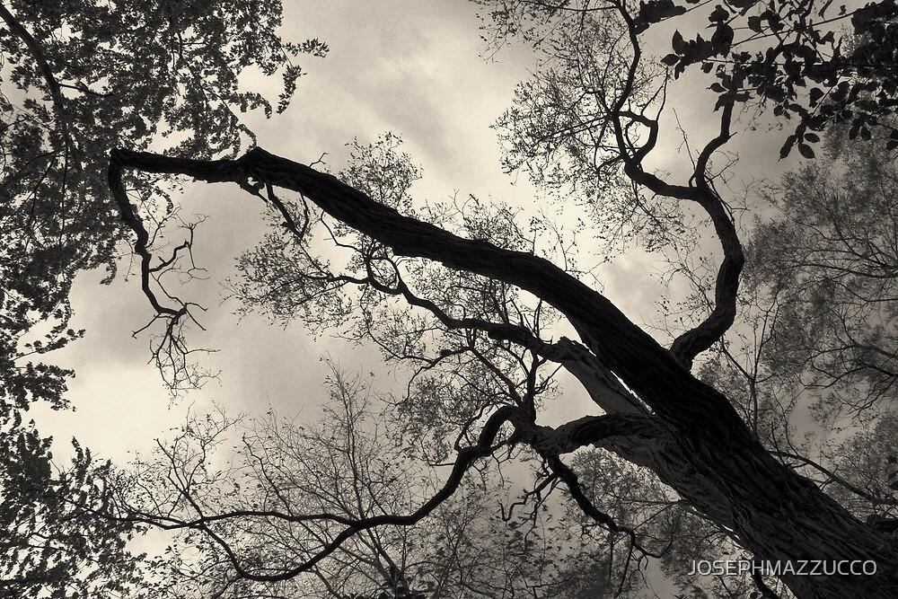 nature in a tree.. by JOSEPHMAZZUCCO