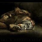 Santan by ArtX