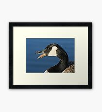 Stay off MY Patch of grass! Framed Print