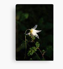 Spring Flower Canvas Print
