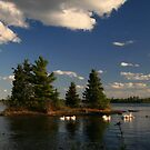 """""""  White Pelicans on the Lake of the Woods  """" by fortner"""