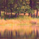 Summer Reflections by Karol Livote