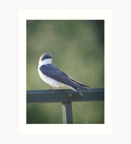Female Tree Swallow ~ Art Print
