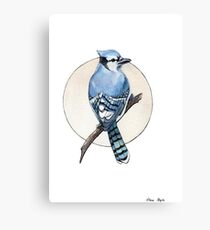 Blue Jay Canvas Print