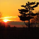 A Golden Evening by lorilee
