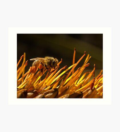 Pollen packen Kunstdruck