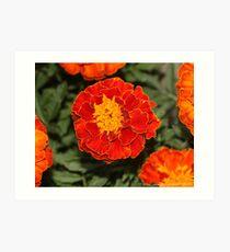 macro flora 025 Art Print