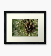Dandelion Decay Framed Print