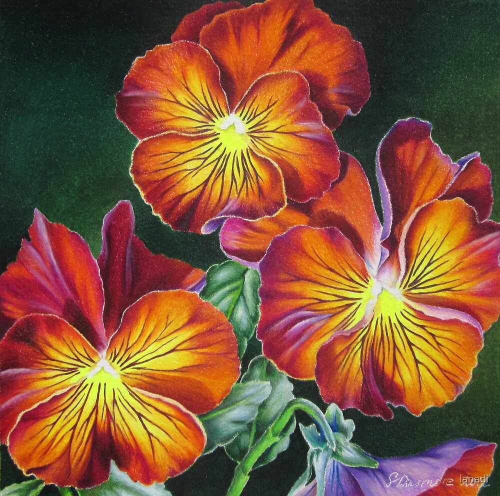 Pansies in Sunset Colors by lanadi