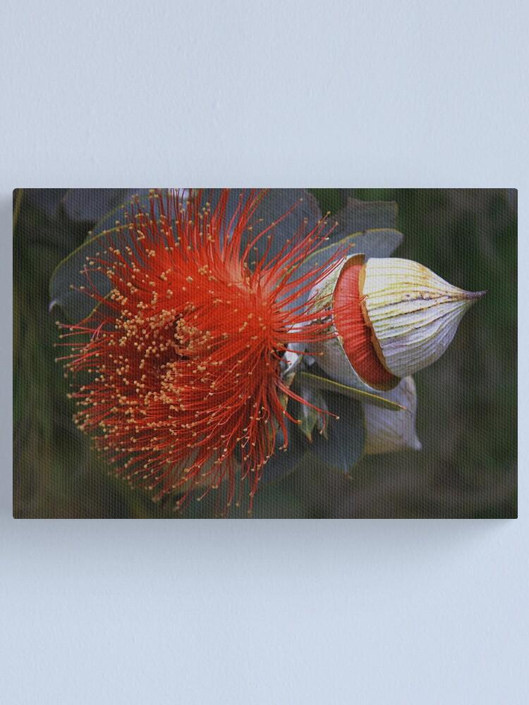 Alternate view of Eucalyptus macrocarpa Canvas Print