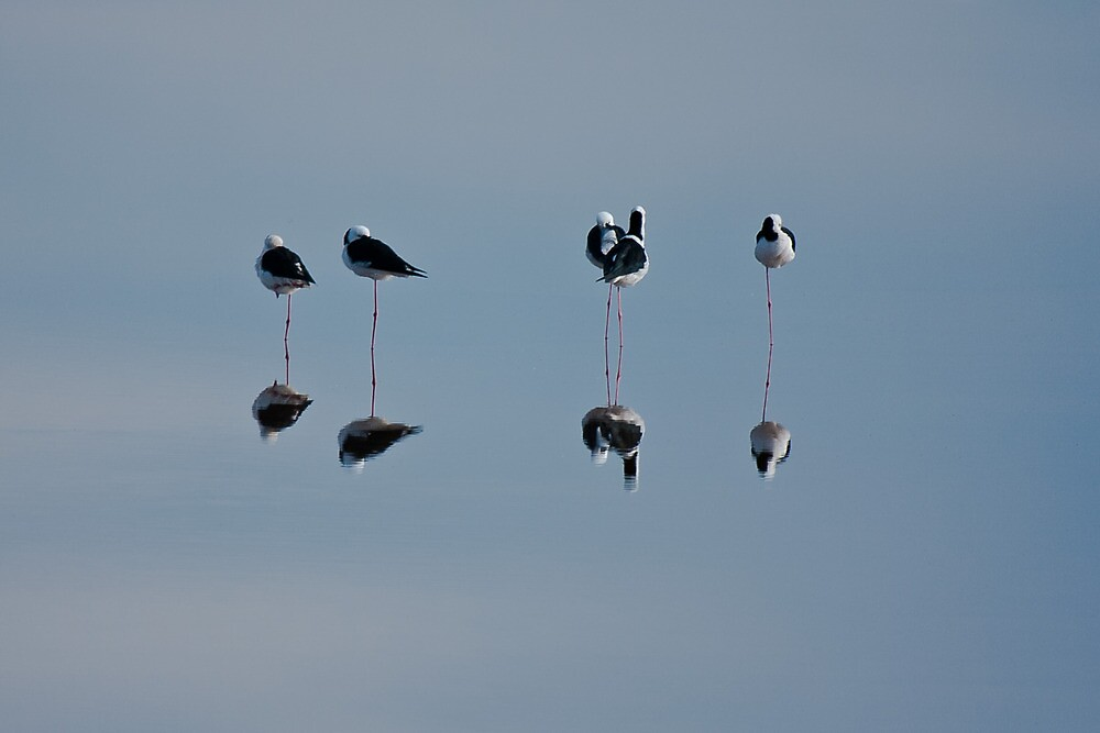 Snoozing Stilts by Hedoff