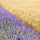 Lavender and wheat fields by Sami Sarkis