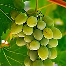 Green grape and vine leaves by Sami Sarkis