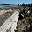 Parksville Beach - Drift Wood and Sand by rsangsterkelly