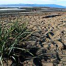 Parksville Beach - Grass, Sand and Beach by rsangsterkelly