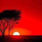 Sunset in the Serengeti by arodericks