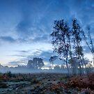 Predawn Mist on Wisley Common by Martin Griffett