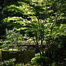 japanese gardens 2 by Bruce  Dickson