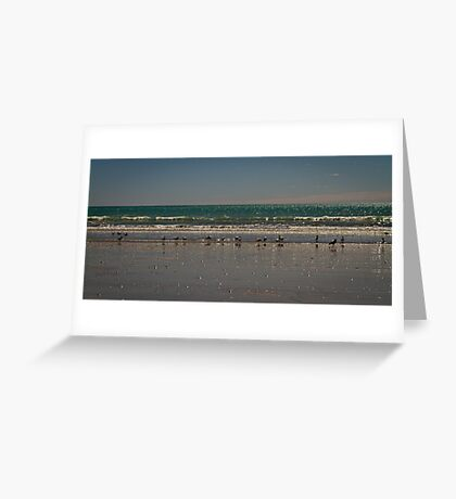 Seagulls - Eighty Mile Beach - WA Greeting Card