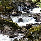 Hermitage Falls by dgscotland