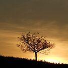 Caerphilly sunset  by Hucksty