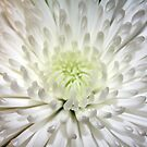 White Glow by dgscotland