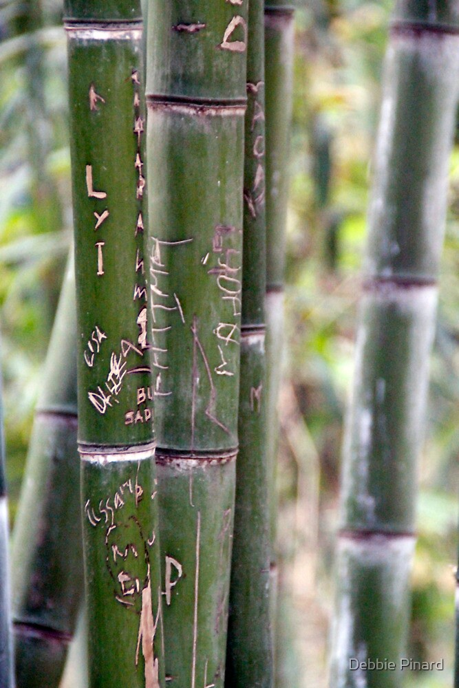 Graffiti in the Bamboo, Marrakesh Morocco by Debbie Pinard