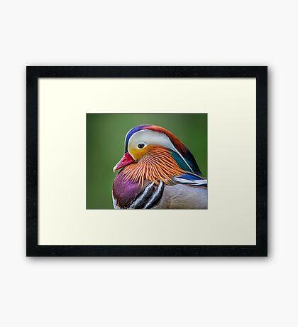 Mandarin Portrait Framed Print