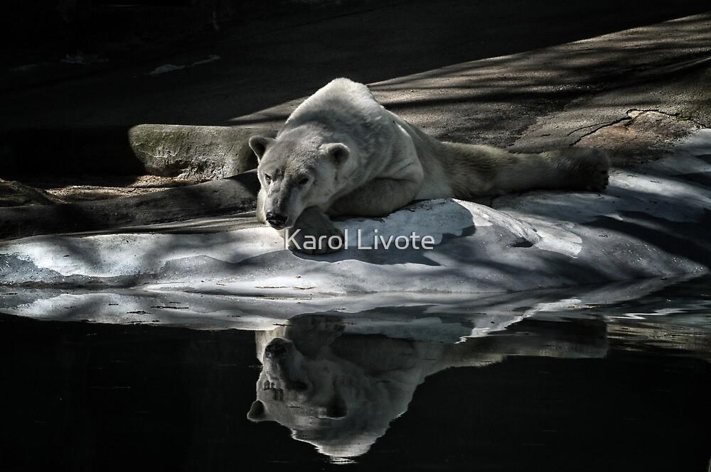 A Polar Bear Reflects by Karol Livote