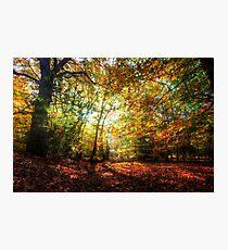 Sunlight Through Autumn Leaves Photographic Print
