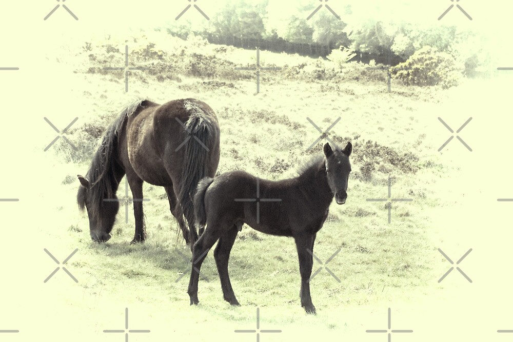 Dartmoor Pony and Foal by Catherine Hamilton-Veal  ©