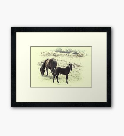 Dartmoor Pony and Foal Framed Print