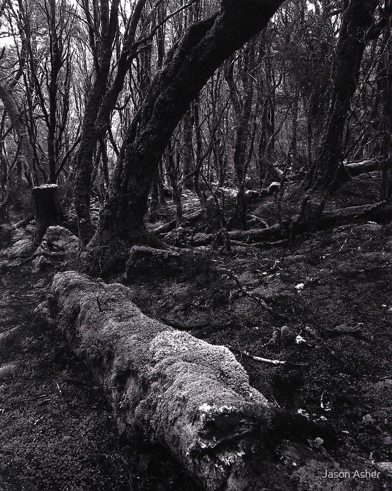"""""""Enchanted Forest"""" ∞ Cradle Mountain, Tasmania - Australia by Jason Asher"""