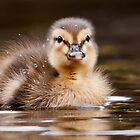Mallard Duckling by Stephen Liptrot