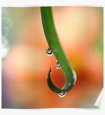 Orange droplets   Poster