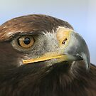 Eagle Eyed by Edward Gunn