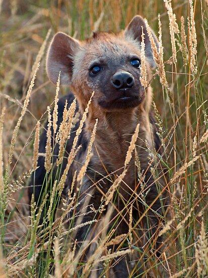Curious by Explorations Africa Dan MacKenzie