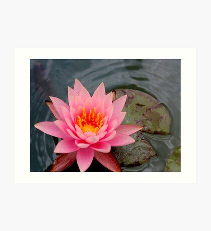 Pink Lotus Flower Art Print